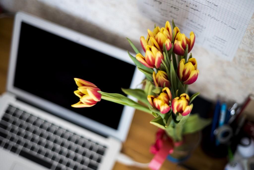 pixabay-flowers-871685